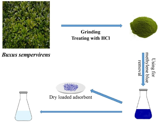 Equilibrium, kinetic, and thermodynamic applications for methylene blue removal using <i>Buxus sempervirens</i> leaf powder as a powerful low-cost adsorbent